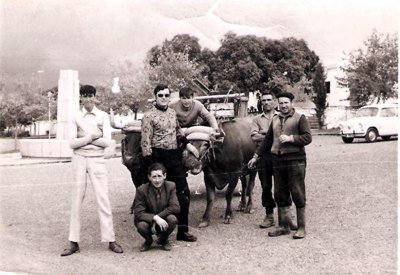 un colono con sus vacas en mirones